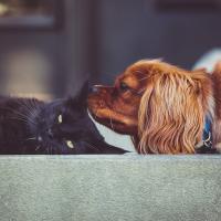 Vet Cat Dog in Rapid City SD