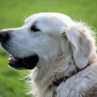 Dog Clinic Veterinary Care Rapid City SD